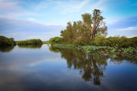 kakadu: Landscape of Kakadu National Park,Yellow Waters, Australia