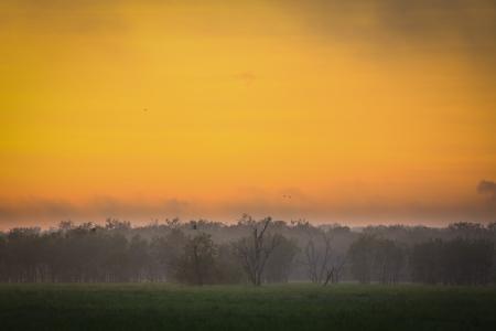 pandanus tree: Sunrise at Yellow Waters, Kakadu National Park, Australia