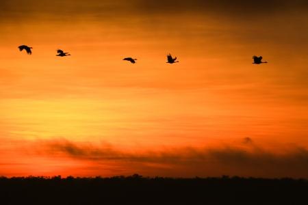 Sunrise at Yellow Waters, Kakadu National Park, Australia