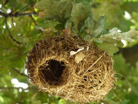 weavers: Weavers bird nest hangiing in tree
