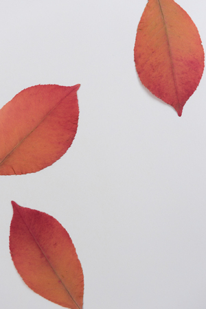 autumn colorful background