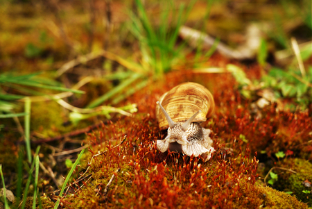 Snail on moss and surrounded by green grass