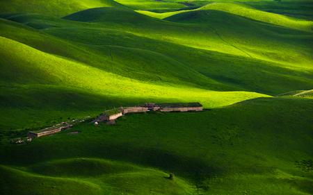 新疆の草地風景