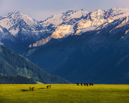 Xinjiang  grassland scenery Imagens
