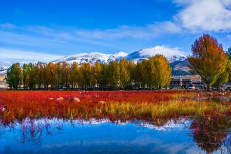 稲城、四川省で赤い草原の風景