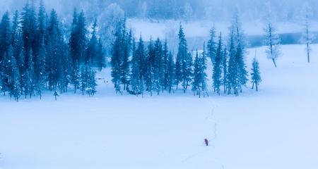 Xinjiang Kanas morning snow scene Imagens