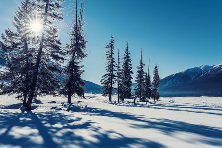 Xinjiang Kanas snow scenery