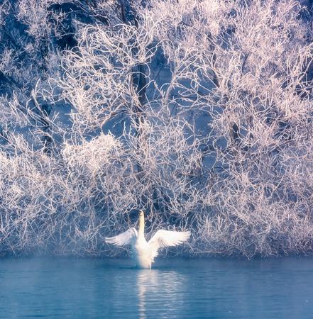 Xinjiang Yili Swan Spring scenery