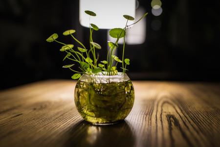 Aquatic plant still life photography