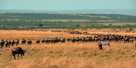 Scenery in the Masai Mara, Kenya, Africa