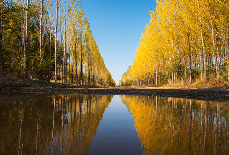 Tacheng country road in autumn