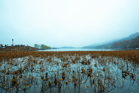 West Lake landscape view of a lotus pond