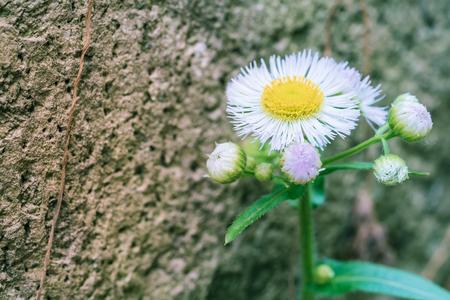 Small daisy close-up