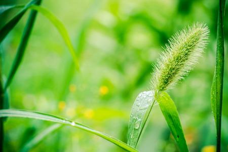 wild green grasses