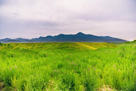 A green hillside Stock Photo