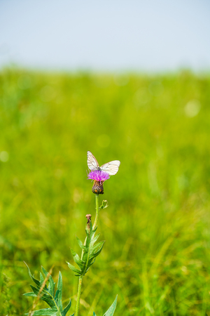 A butterfly on a wildflower