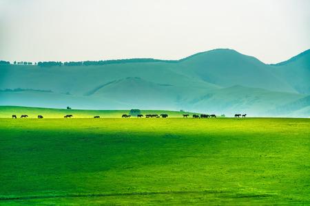 paisaje de pastizales