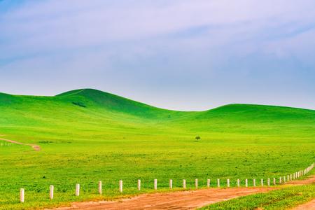 grassland scenery