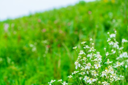 The Ulan prairie in the midsummer Stock Photo