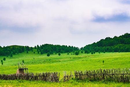 The summer prairie