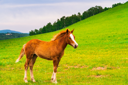 A brown horse standing on the grassland