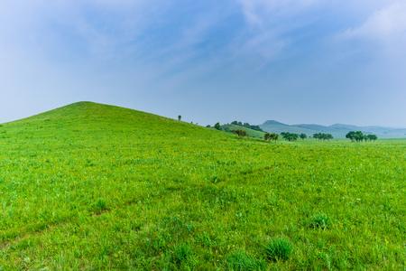 Summer prairie scenery