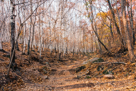 autumn mountain forest 版權商用圖片