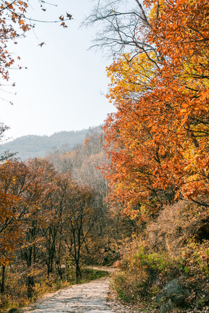 autumn mountain forest with road