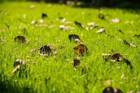 Fallen leaves on the lawn