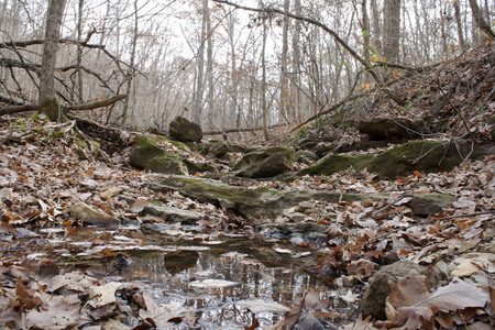 Creek bed in the woods during winter