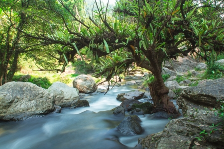 murmur: Photo of a small stream  with long exposure
