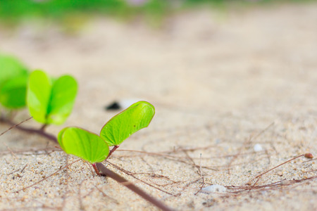 photo of Green leaves on the sand photo