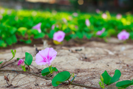 photo of Purple flowers up to the sand. photo