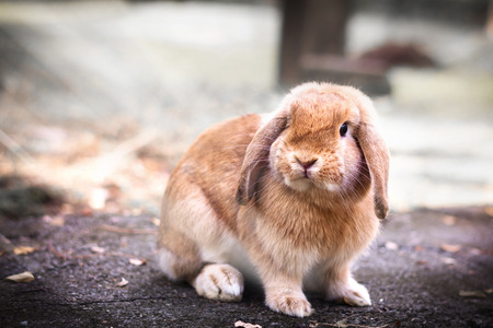 munch: Photo of Cute Baby Bunny rabbit playing in the garden Stock Photo