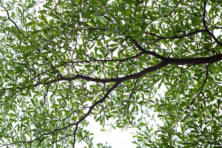 nearness: green leaves texture of tree Stock Photo