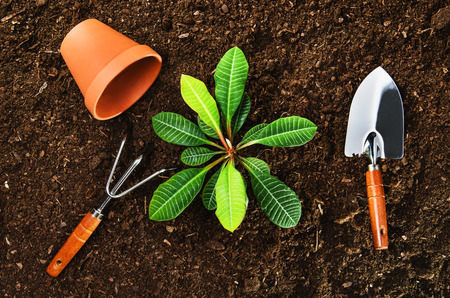peat pot: Planting a beautiful, green leaved plant on a natural, sandy soil backgroud. Camera from above, top view. Natural background for advertisements. Stock Photo