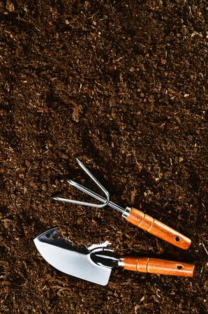 turba: Plantar una hermosa planta con hojas, verde sobre un fondo de color natural, de arena. Cámara de la vista por encima, la parte superior. natural de fondo para anuncios. Foto de archivo