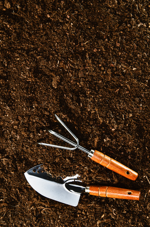 peat pot: Planting a beautiful, green leaved plant on a natural, sandy backgroud. Camera from above, top view. Natural background for advertisements.