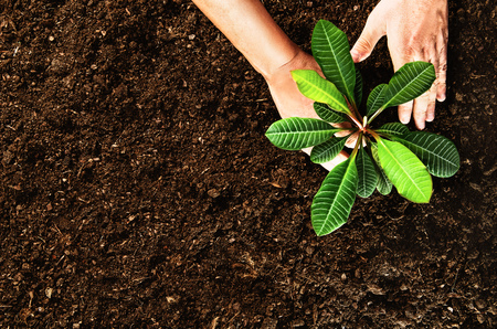 leaved: Planting a beautiful, green leaved plant on a natural, sandy backgroud. Camera from above, top view. Natural background for advertisements.