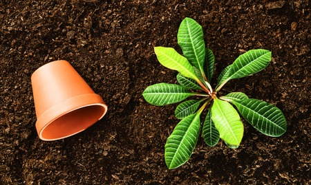 turba: Planting a beautiful, green leaved plant on a natural, sandy backgroud. Camera from above, top view. Natural background for advertisements.