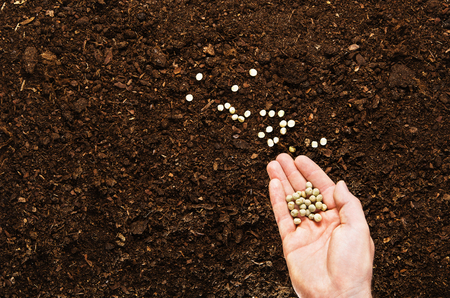 soil texture: Fertile soil texture background seen from above, top view. Gardening or planting concept. Mans hand planting or seeding