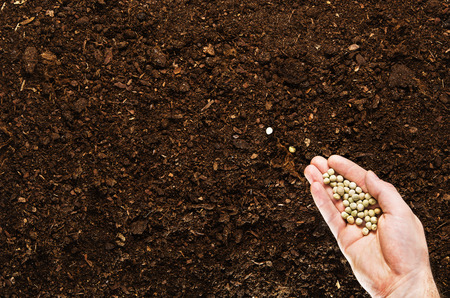 fertile: Fertile soil texture background seen from above, top view. Gardening or planting concept. Mans hand planting or seeding