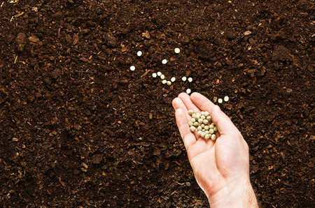turf pile: Fertile soil texture background seen from above, top view. Gardening or planting concept. Mans hand planting or seeding