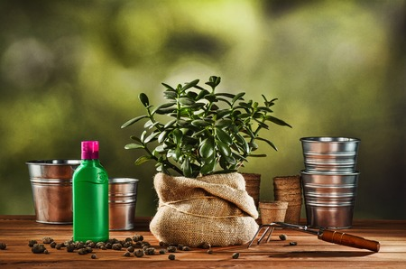 peat pot: Summer work in the garden. Transplanting or bursting a beautiful pot flower at home. Concept photograph for background or advertising. Stock Photo