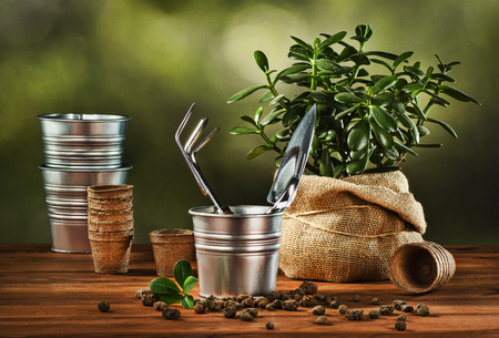 Summer work in the garden. Transplanting or bursting a beautiful pot flower at home. Concept photograph for background or advertising. Stock Photo
