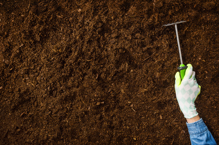 Woman hand planting a plant on a natural, soil backgroud. Camera from above, top view. Natural background for advertisements. Reklamní fotografie