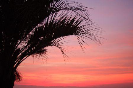 riverside trees: Sunset