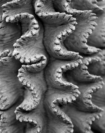 Wavy Cactus Detail