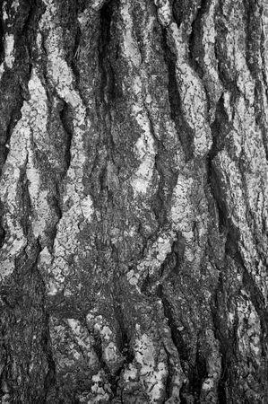Tree Bark Detail photo