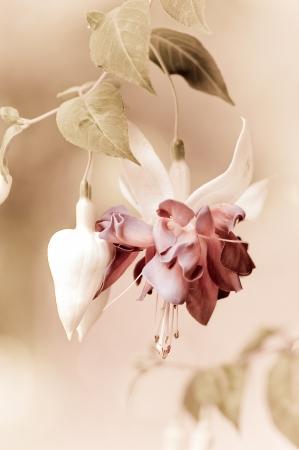 chic: Shabby Chic Flower